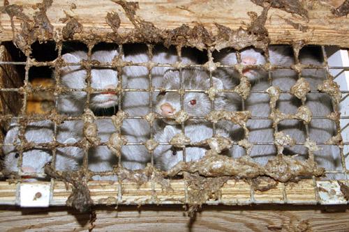 hummer töten tierschutz